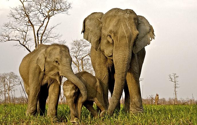 Kaziranga national parc