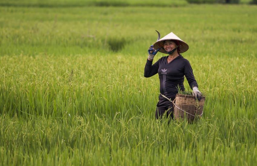 Image Le Vietnam en Famille