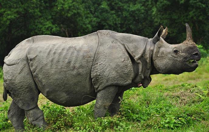Parc national Royal Chitwan