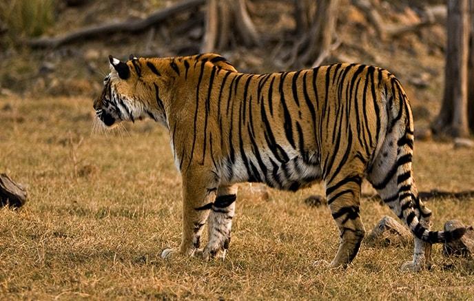 Image Palais et tigres en Famille