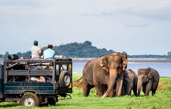 Uda Walawe Nationalpark – Mirissa