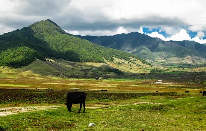 Thimphu - Gangtey