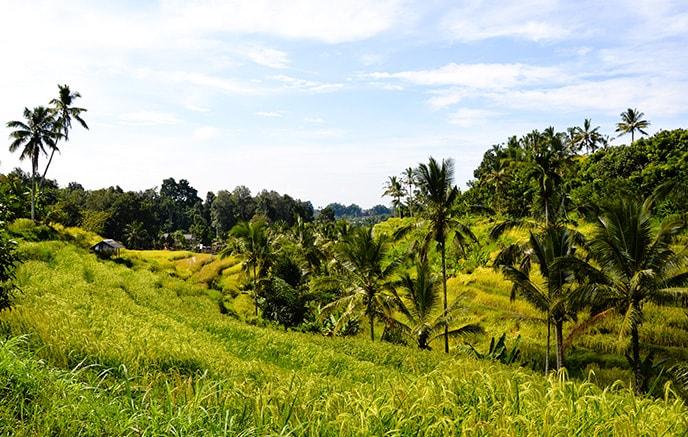 Image L'Indonésie, de Java à Bali