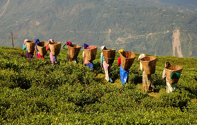 Darjeeling (2130 m)