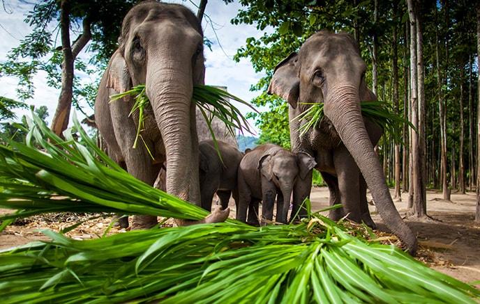 Chiang Mai - Ayutthaya