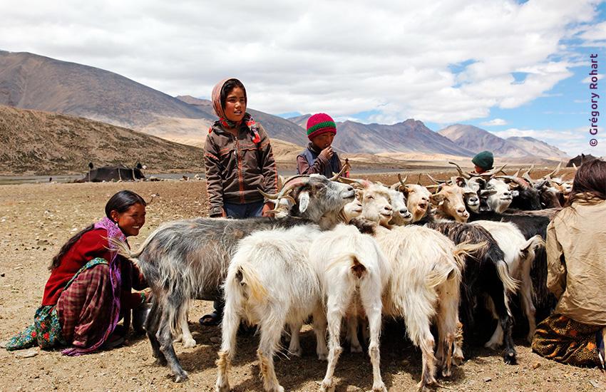 Voyage à pied : Inde : Au fil du pashmina