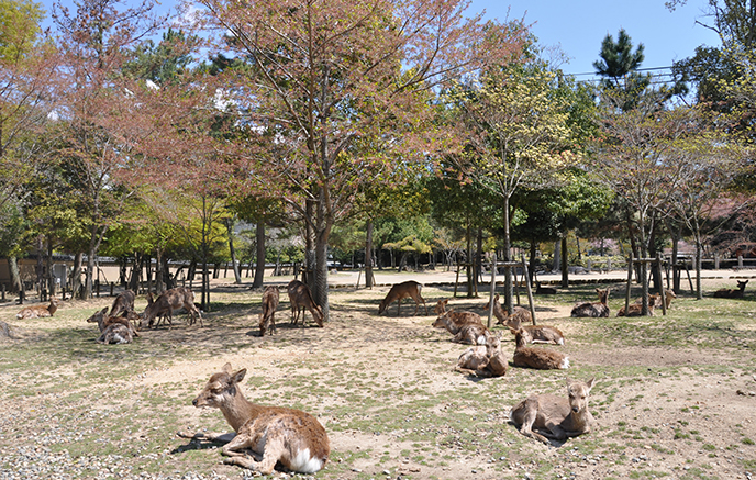 Les animaux du Japon